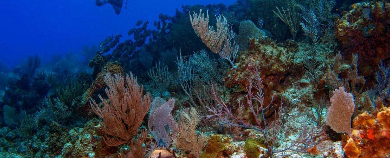 Vista Park Reef