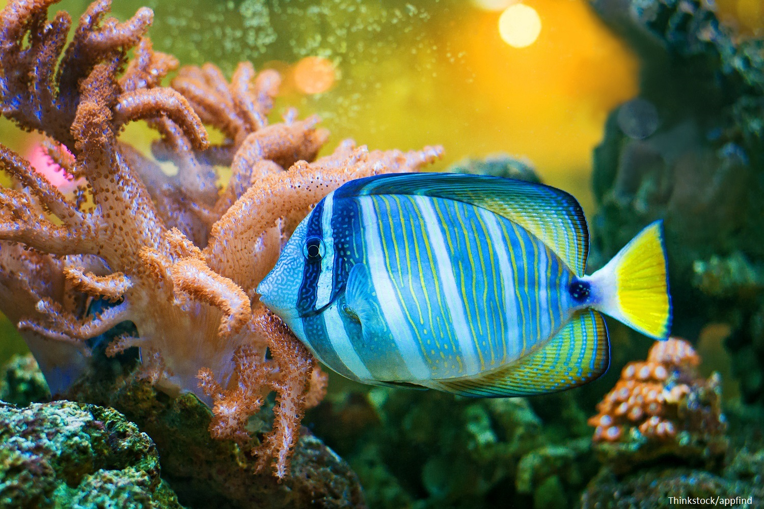 which are the best fort lauderdale aquariums to visit