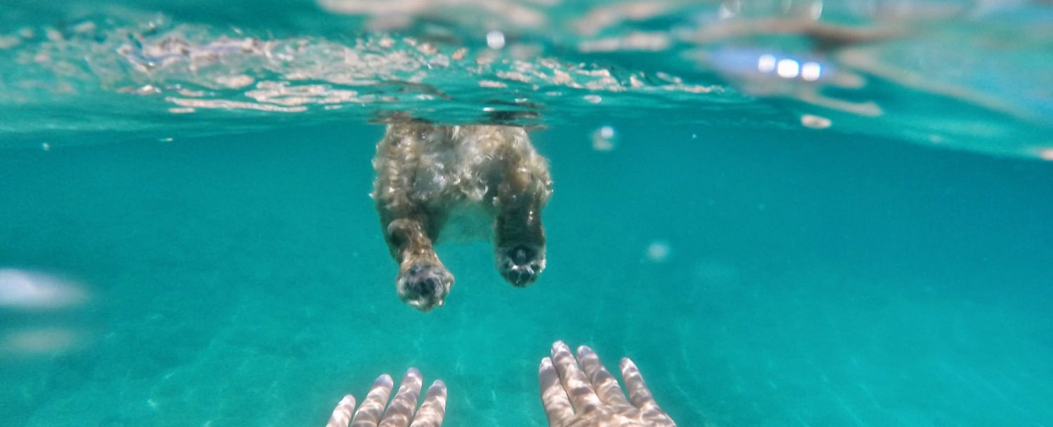 Swimming with Dog in Ocean