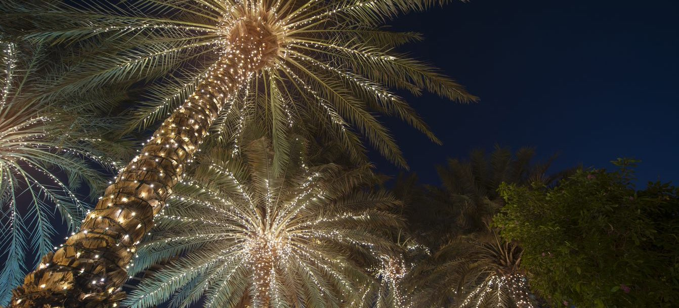 christmas in fort lauderdale, lights on palm trees